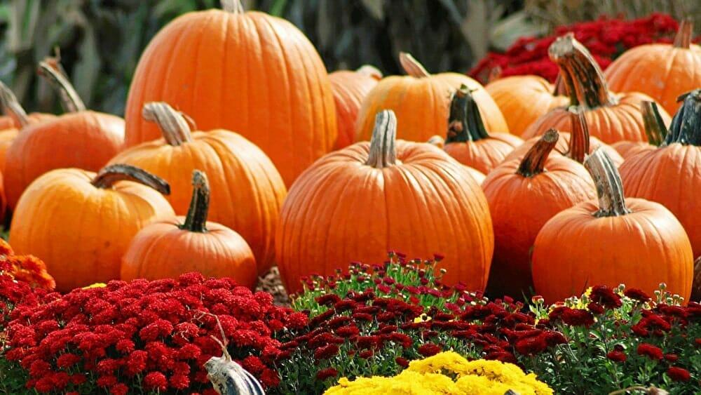 Légumes d'automne, les bienfaits de la citrouillepour maigrir