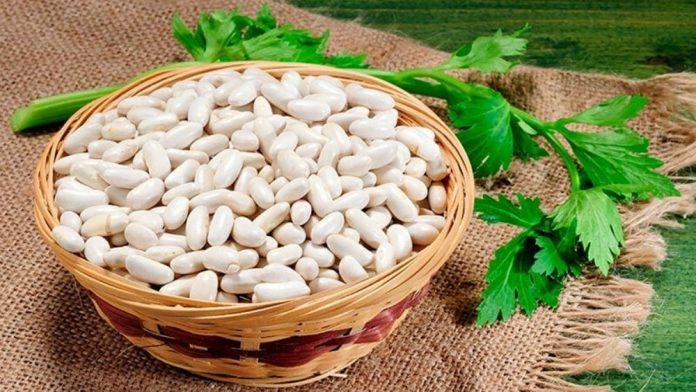 haricot blanc : liste des légumes secs
