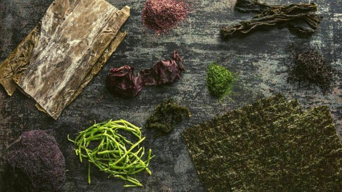algues - aliments sources de magnésium
