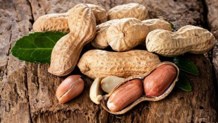 arachide : liste des légumes secs