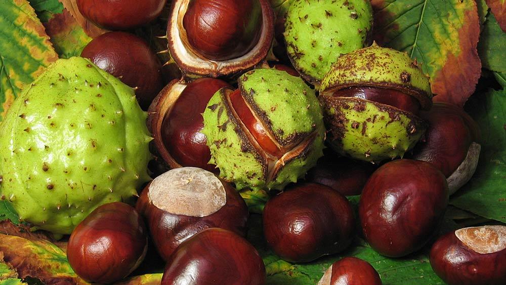 bienfaits du marrionnier d'Inde