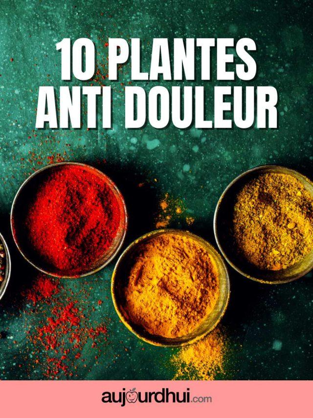 Top 10 des plantes anti douleur