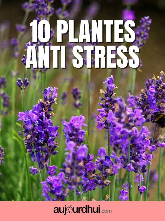 Top 10 des plantes anti stress