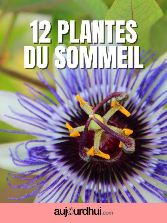 Top 12 des plantes pour bien dormir
